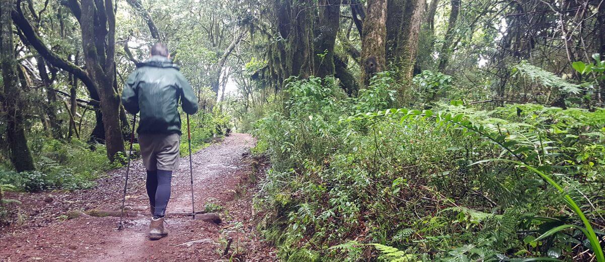 Durch den Regenwald