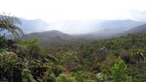 Blick über den Dschungel Papuas