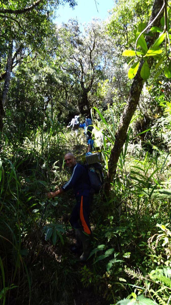 Kein Weg im Dschungel