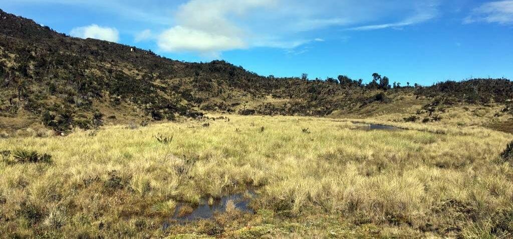Weite Sumpflandschaft